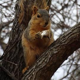 Sara  Raber - Feasting on Fish Fox Squirrel