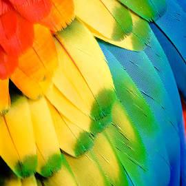 Karen Wiles - Feather Rainbow