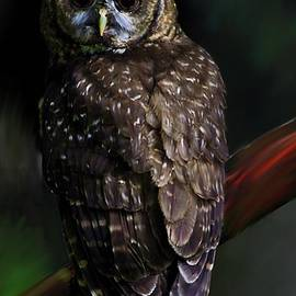 Shere Crossman - Feathered Beauty