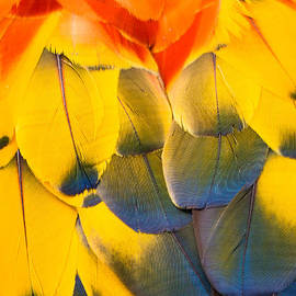 Robin Zygelman - Feathers
