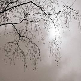 Alexander Senin - February Sun - Featured 3