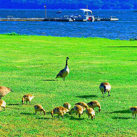 Bob and Nadine Johnston - Feeding Goslings in Alabama