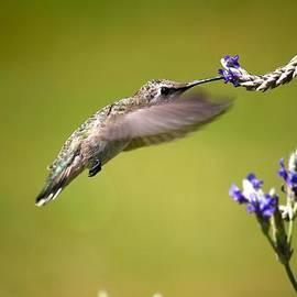 Veronica Vandenburg - Feeding in Flight