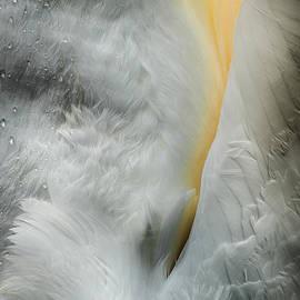 Andy Astbury - Feeding Swan