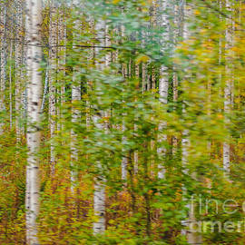 Ismo Raisanen - Feels Like Autumn in a Forest of Birch Trees
