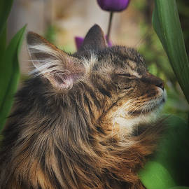 Dee Browning - A Maine Coon Cat Enjoying The Garden