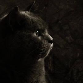 Laura Melis - Feline perfection