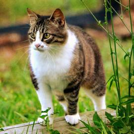 Deena Stoddard - Feline Portrait