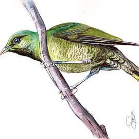 Anne Gardner - Female Bower Bird