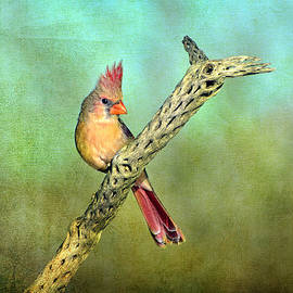 Barbara Manis - Female Cardinal
