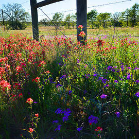 Lynn Bauer - Fenceline Flowers