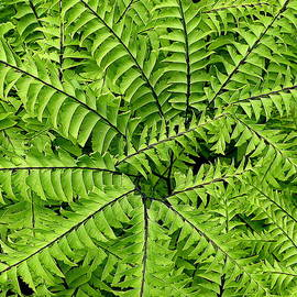 Brian Chase - Fern Abstract