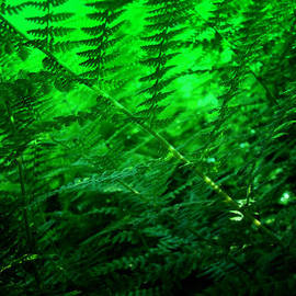 Mother Nature - Ferns and Filtered Sunlight