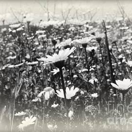 Clare Bevan - Field of Beauty