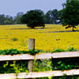 Jim Finch - Field of Yellow