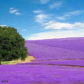 Bruce Nutting - Field of Lavender