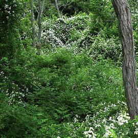 Michelle Wiarda - Field of Love A Heart and Flowers