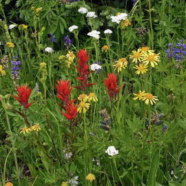 Sally Weigand - Field Of  Multicolor Wildflowers