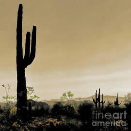 Tim Richards - Fields of Saguaro
