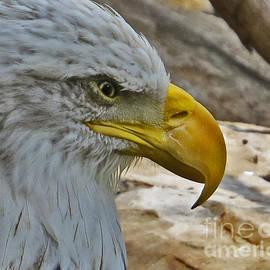Dawn Gari - Fierce Eagle