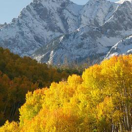 Aaron Spong - Fiery Aspen Landscape