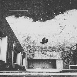 "Christian  Frarey - ""fifteen Feet Of Pure White Snow """