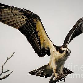 Quinn Sedam - Fight or Flight