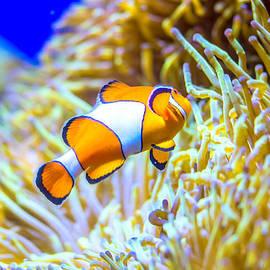 Jijo George - Finding Nemo