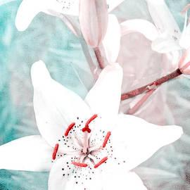 Lali Kacharava - Fine lilies