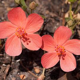 Robert Ford - Fire Flowers Kundelungu Park Congo