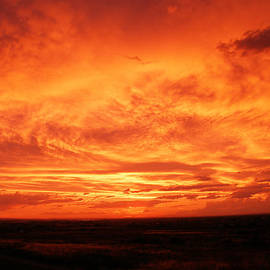 Dawn Kori Snyder - Fire in the Sky