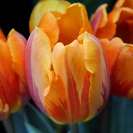 Jennie Marie Schell - Fire Orange Tulip Flowers