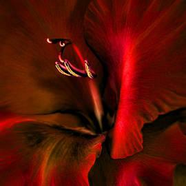 Jennie Marie Schell - Fire Red Gladiola Flower