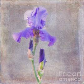 Janice Rae Pariza - Firecracker Iris