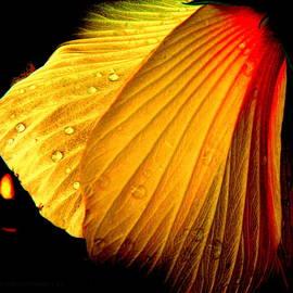 Kathy Barney - Firey Hibiscus Petals