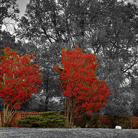 John Straton - First Fall Color in Red