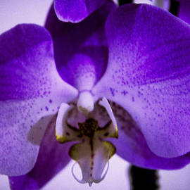 Sheree Lauth - First Orchid of Winter