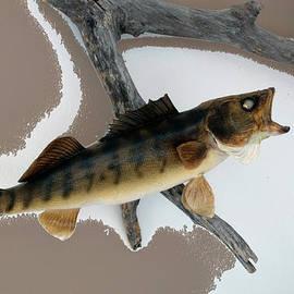 Thomas Woolworth - Fish Mount Set 02 C
