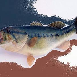 Thomas Woolworth - Fish Mount Set 09 C
