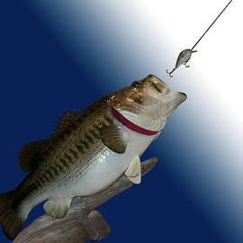 Thomas Woolworth - Fish Mount Set 13 B