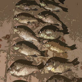Patricia Januszkiewicz - Fish Pyramid