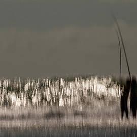 Constance Fein Harding - Fishing