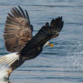 Angie Vogel - Fishing Eagle Style