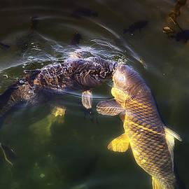 Linda Tiepelman - Fishy Kisses