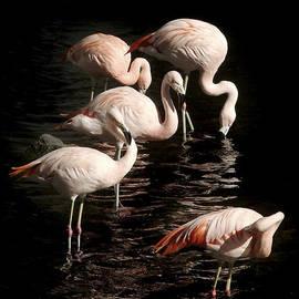 Michael Plotczyk - Five Pink Flamingos