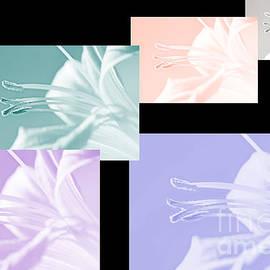 Lali Kacharava - Five lilies