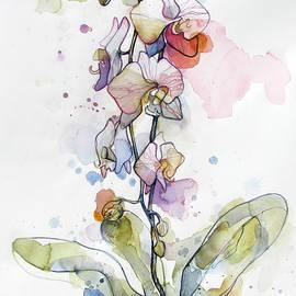 Wendy Westlake - Five Orchids