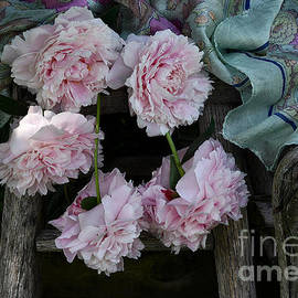 Luv Photography - Five Pink Peonies and a Scarf