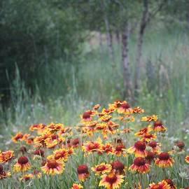 Valerie Loop - Flagstaff Flowers