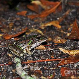Al Powell Photography USA - Flamboyant Frog